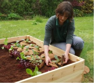 Tending to one of our raised beds